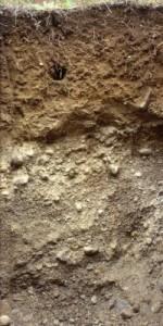 Půdní profil 3