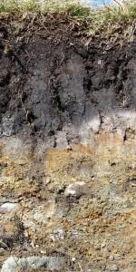 Půdní profil - podzol